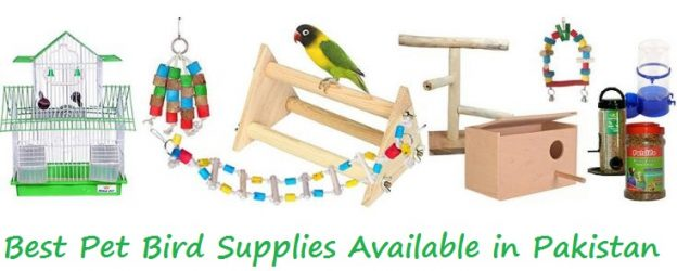 Best Pet Bird Supplies Available in Pakistan