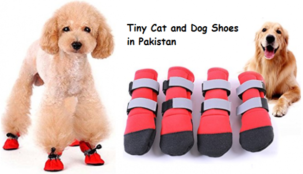 Tiny Cat and Dog Shoes in Pakistan